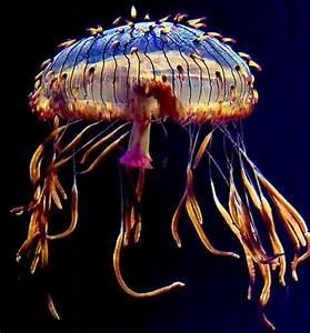 Jellyfish (15 pics) - Izismile.com