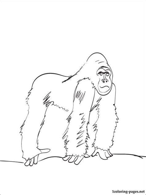 gorilla printable coloring page coloring pages