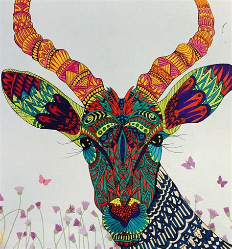 antelope in  pen in adult coloring book