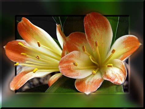 bloemen plaatje animaatjesnl