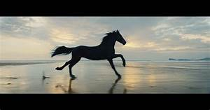 Letters Of Complain A Famous Black Horse And A Stunning Welsh Beach Come
