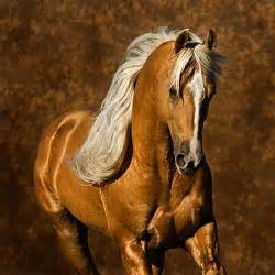 Horses with Avon: Horses - we love them no matter what?