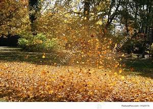 Blowing Leaves Image
