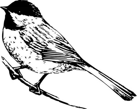 realistic drawing   chickadee coloring page realistic
