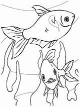 Aquarium Ausmalbilder Fische Ausdrucken Malvorlagen Kostenlos Zum Fish sketch template