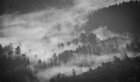 Free photo: Foggy, Forest, Mystery, Fog   Free Image on Pixabay   1149180