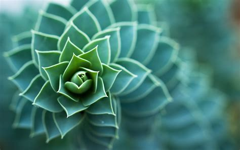 plants macro wallpapers hd desktop  mobile backgrounds