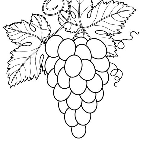 21 sketsa buah