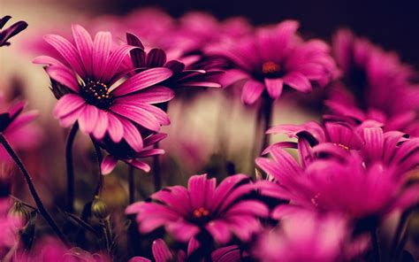 Flower Desktop Backgrounds ·①