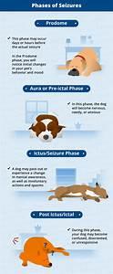 types dog seizures