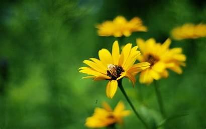Flowers Yellow Summer Widescreen Resolutions 1280 Wallpapers