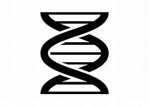 DNA Vector Icon Free Download - SuperAwesomeVectors