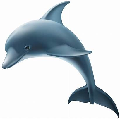 Dolphin Transparent Clip Bottlenose Clipart Dolphins Common