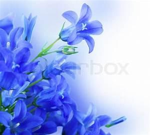 Flowers on a white background, dark blue hand bells ...