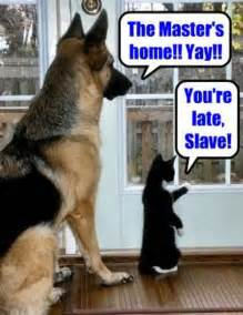 cats vs dogs pets are slaves quotes quotesgram