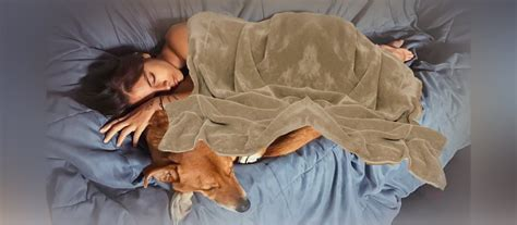 dogs better why sleep than