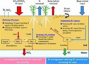 Strategies For Mitigating Soil Acidification In Intensive