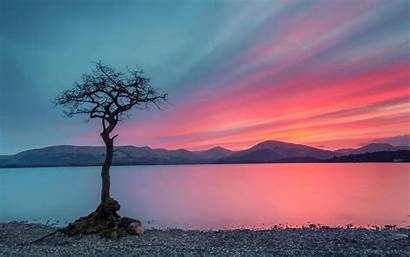 Lonely Tree Sky Dark Wallpapers Backgrounds Nature