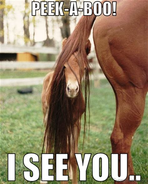 Horse Meme - 30 funny horse memes images pictures graphics picsmine