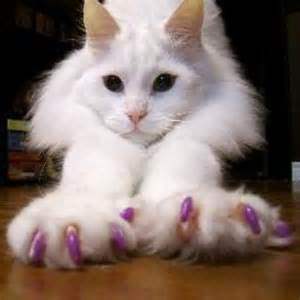 soft paws for cats soft paws soft paws