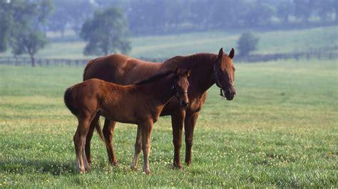 kentucky horse park northern hotels lexington state closest travel