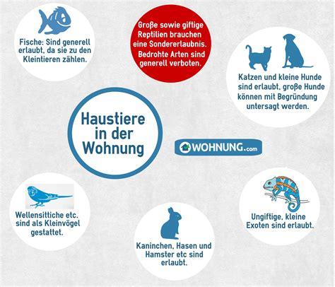 Katze Kleine Wohnung by Wohnung Regelungen Zur Haltung Haustieren Wohnung