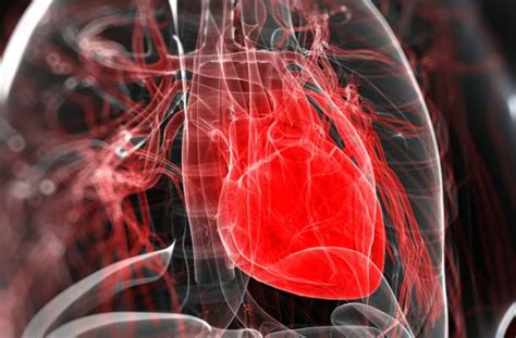 Scientists Grow A Beating Heart In Lab Using Stem Cells