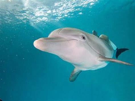 dolphin tales winter    america cute