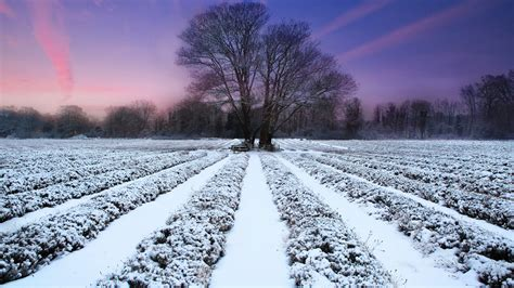 Free Winter Picture by Free Desktop Winter Wallpapers Pixelstalk Net
