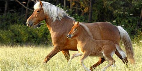auf der norla zeigen pferde und reiter ihr koennen