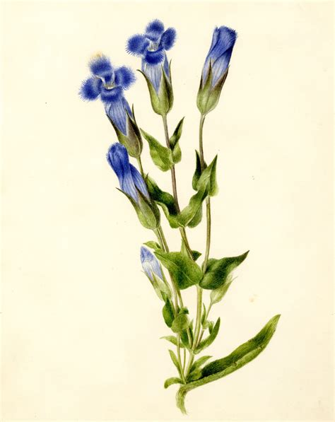 botany flowers botanical flower drawing www pixshark com images galleries with a bite