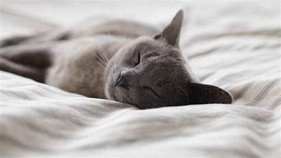 Cat Bed Sleeping Backgrounds Desktop Wallpapers