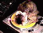 Party Cat GIF - Find & Share on GIPHY