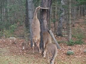 Squirrel Proof Deer Feeder