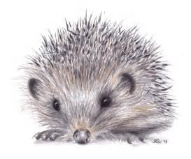 Hedgehog Drawing
