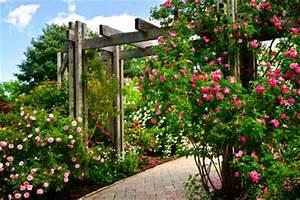 Rosenstock pflege for Französischer balkon mit robuste rosen für jeden garten