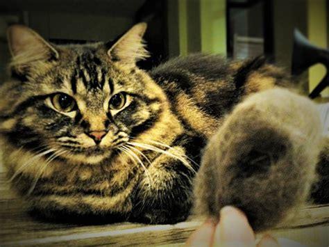 อยากเลี้ยงแมวแต่แพ้ขนแมวต้องทำยังไง
