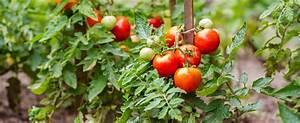 Salat Pflanzen Abstand : bildquelle zoia kostina ~ Markanthonyermac.com Haus und Dekorationen