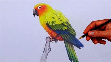 draw  bird  simple colored pencils sun