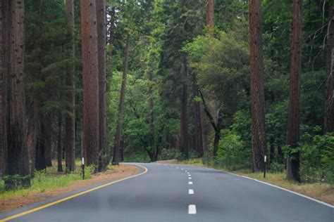stock photo  road   trees   forest