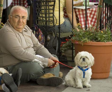 dog companion   elderly