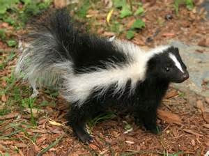 Skunk Smell House Picture
