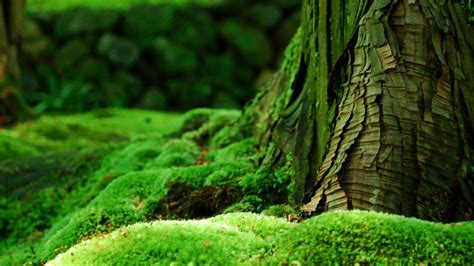 green moss plant close  wallpaper preview wallpapercom