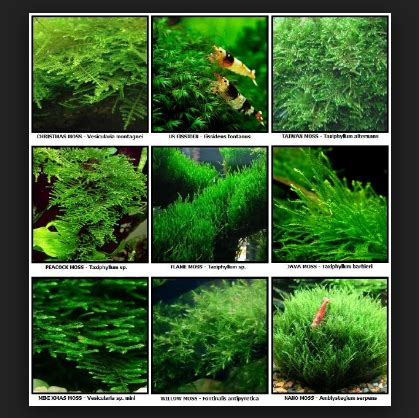 tips mudah  membuat aquascape  aquarium  murah