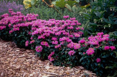 perennial border plants for sun top 10 gardening tips how to make the sun transform your garden