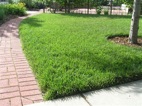 Choosing The Right Turfgrass