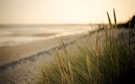 close  plant vegetation ears green sea sand beach blur