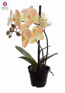Künstliche Orchideen Im Topf : k nstliche orchidee im topf pfirsichgelb 36 cm ~ Watch28wear.com Haus und Dekorationen