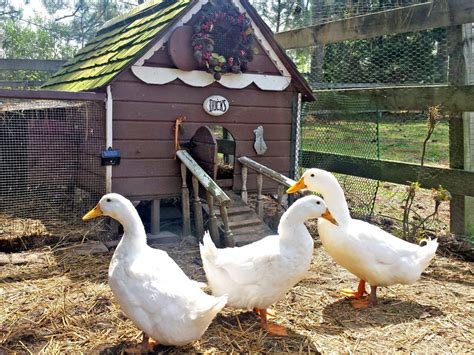 goose shed a guide to duck houses hgtv