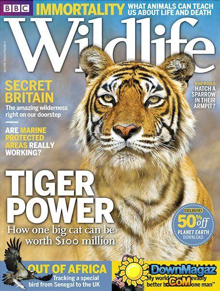 bbc wildlife april    magazines